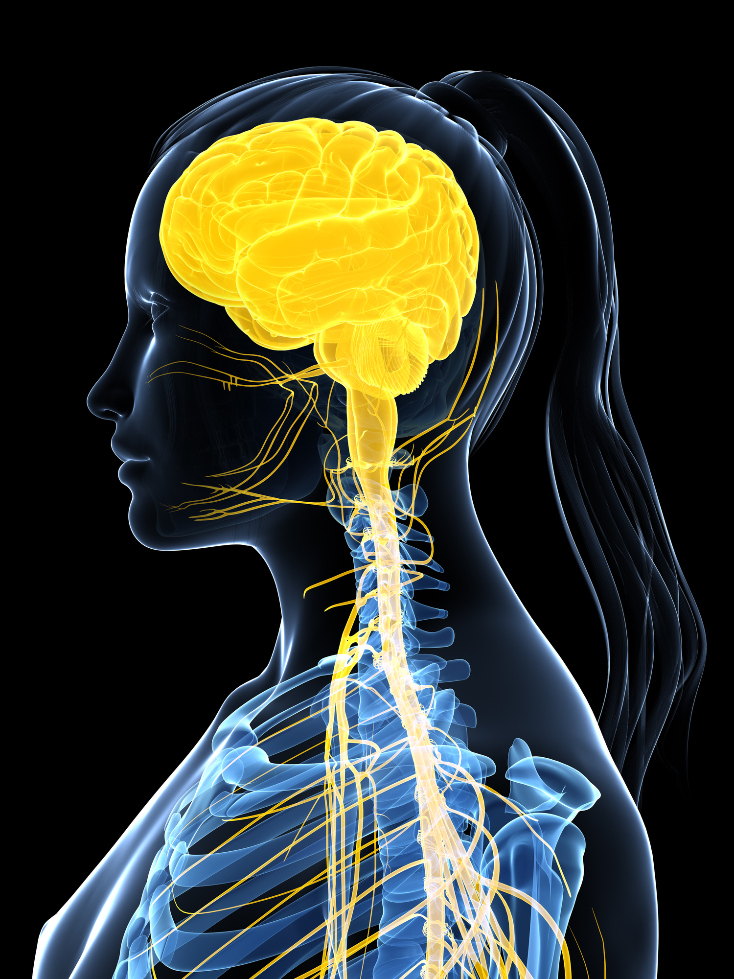 The nervous system controls how comfortable we feel at public speaking