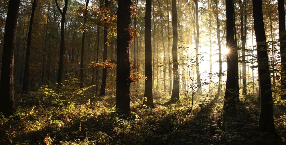 These quotes illuminate the infinite forest of Rolfing